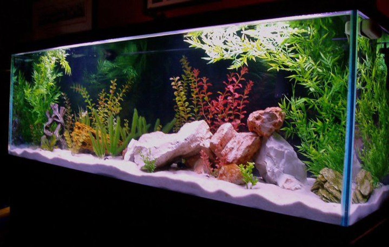 fish tank picture - 150 Gal Lake Malawi. Currently, only 3 Yellow Labs. I'll be adding many fish in the coming year and will re-post.