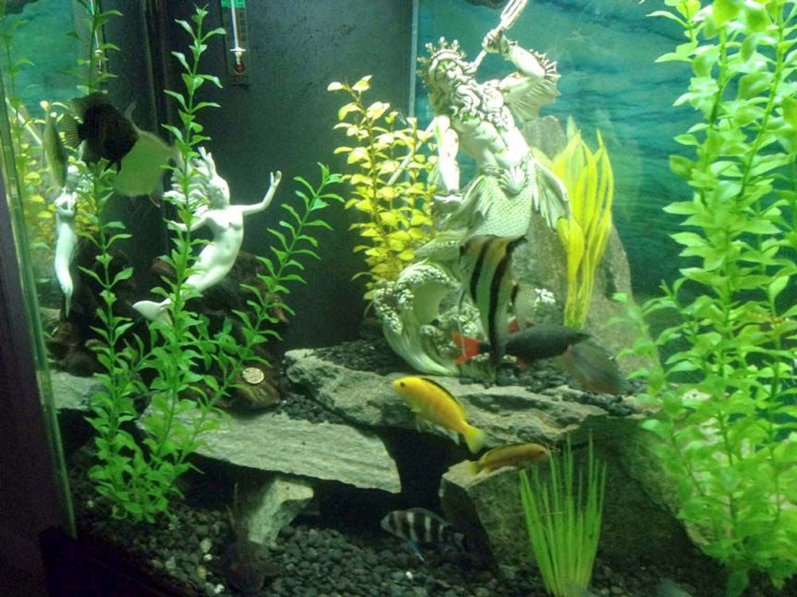 fish tank picture - Neptune Update