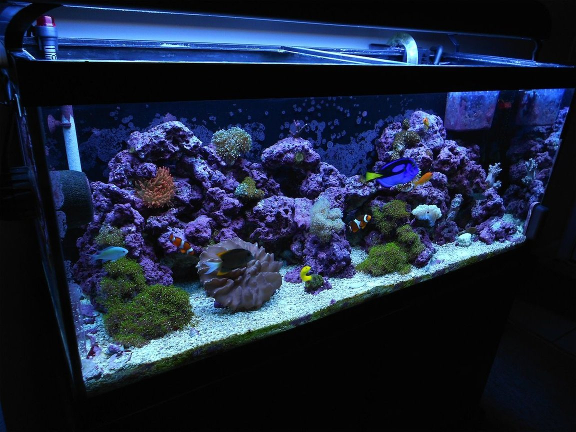 fish tank picture - 12/1/2011 update