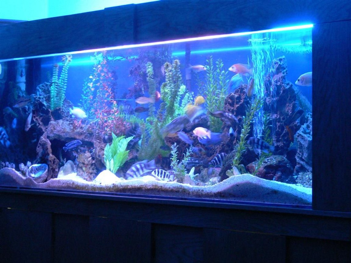 fish tank picture - Dimensions=8X2.5X2 ft