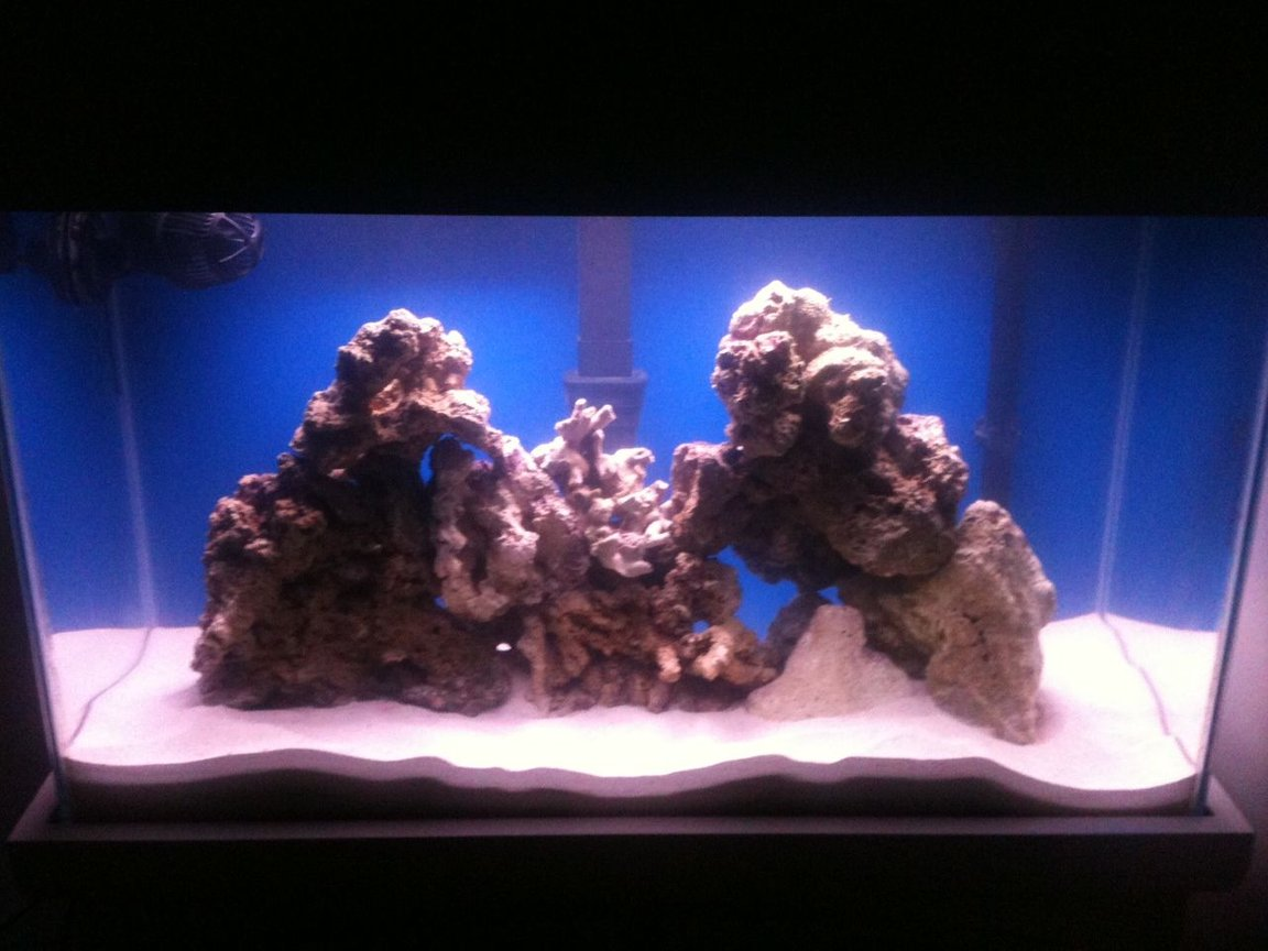 fish tank picture - New Saltwater set up. Live rock with damsel.