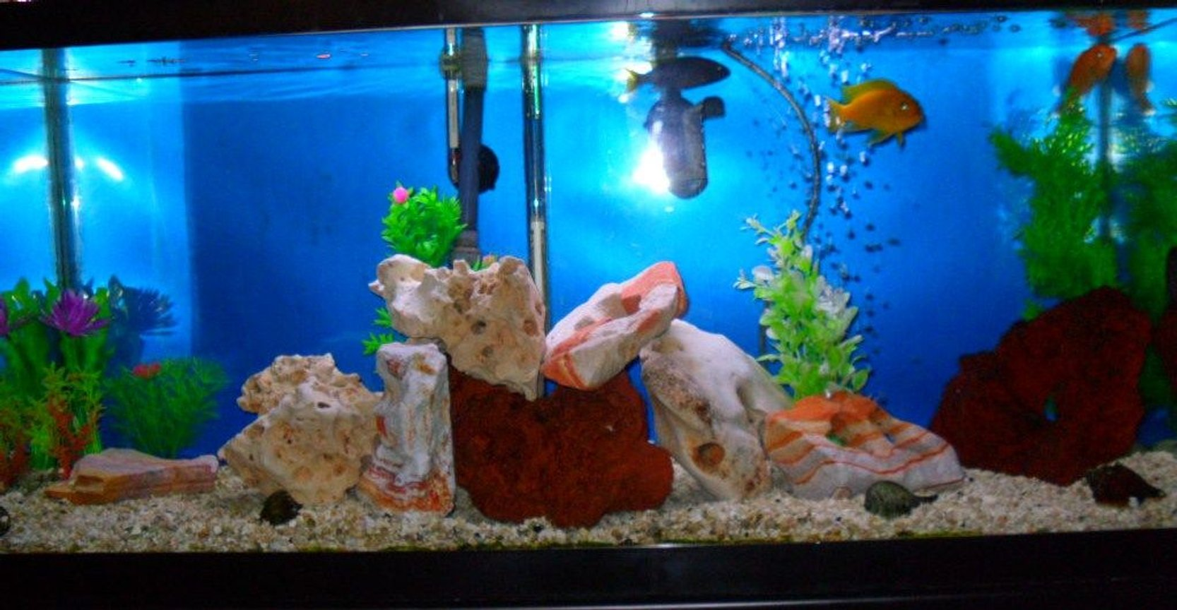fish tank picture - African 30 G