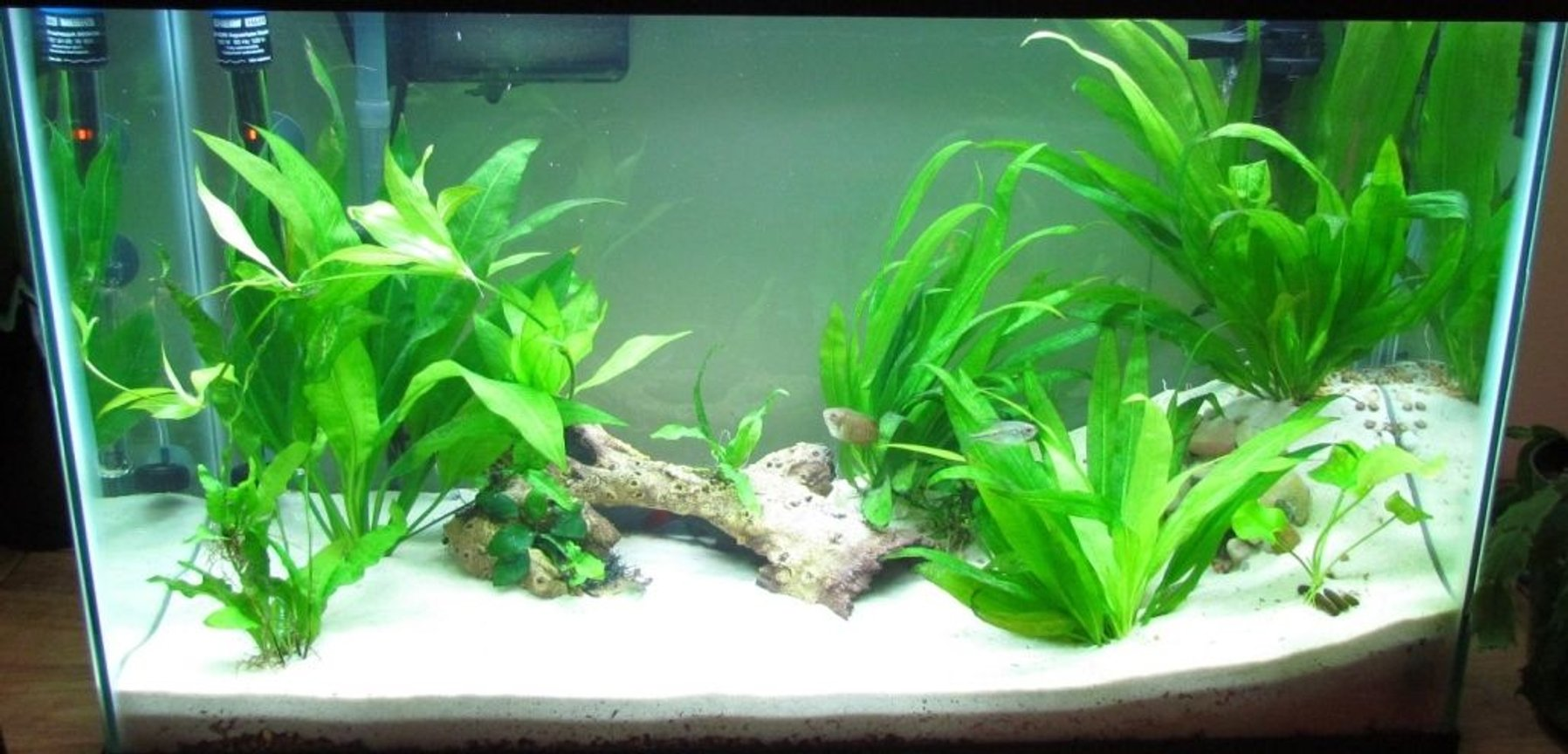 fish tank picture - 1/25/12 Update