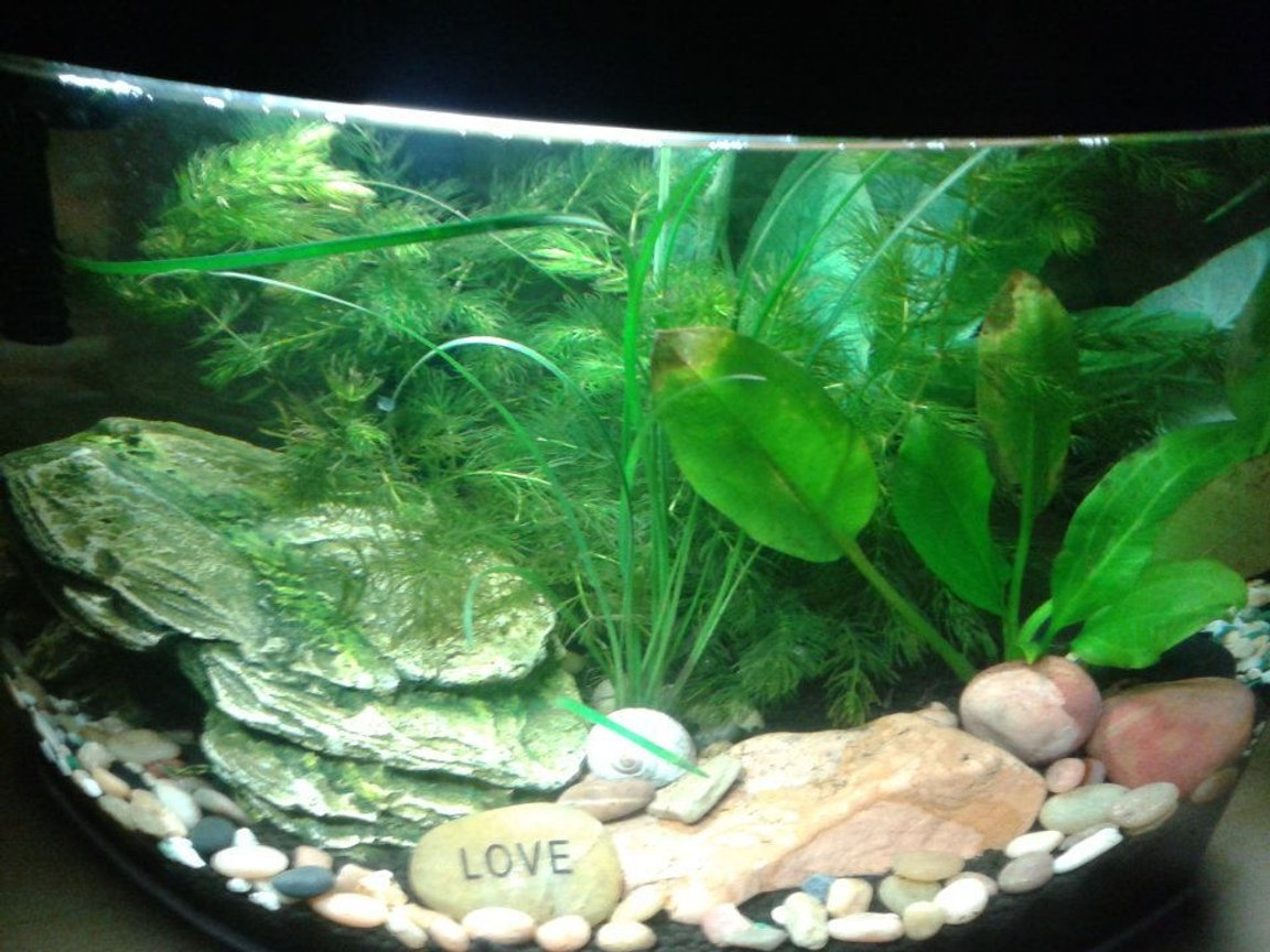 fish tank picture - My little tank