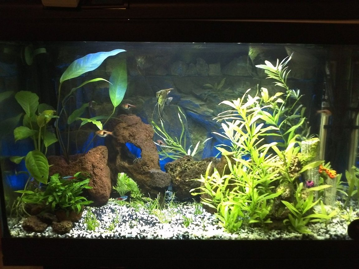 fish tank picture - to be updated, the limnophila grew up a lot!