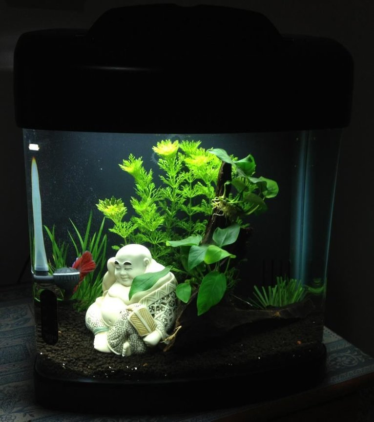 fish tank picture - Planted betta fish tank