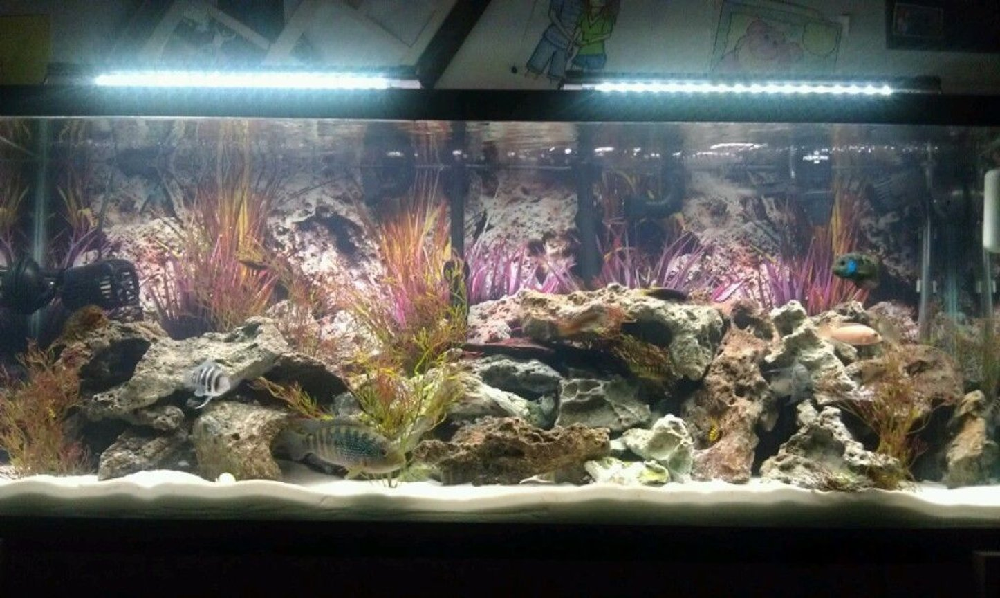 fish tank picture - 55 gallon