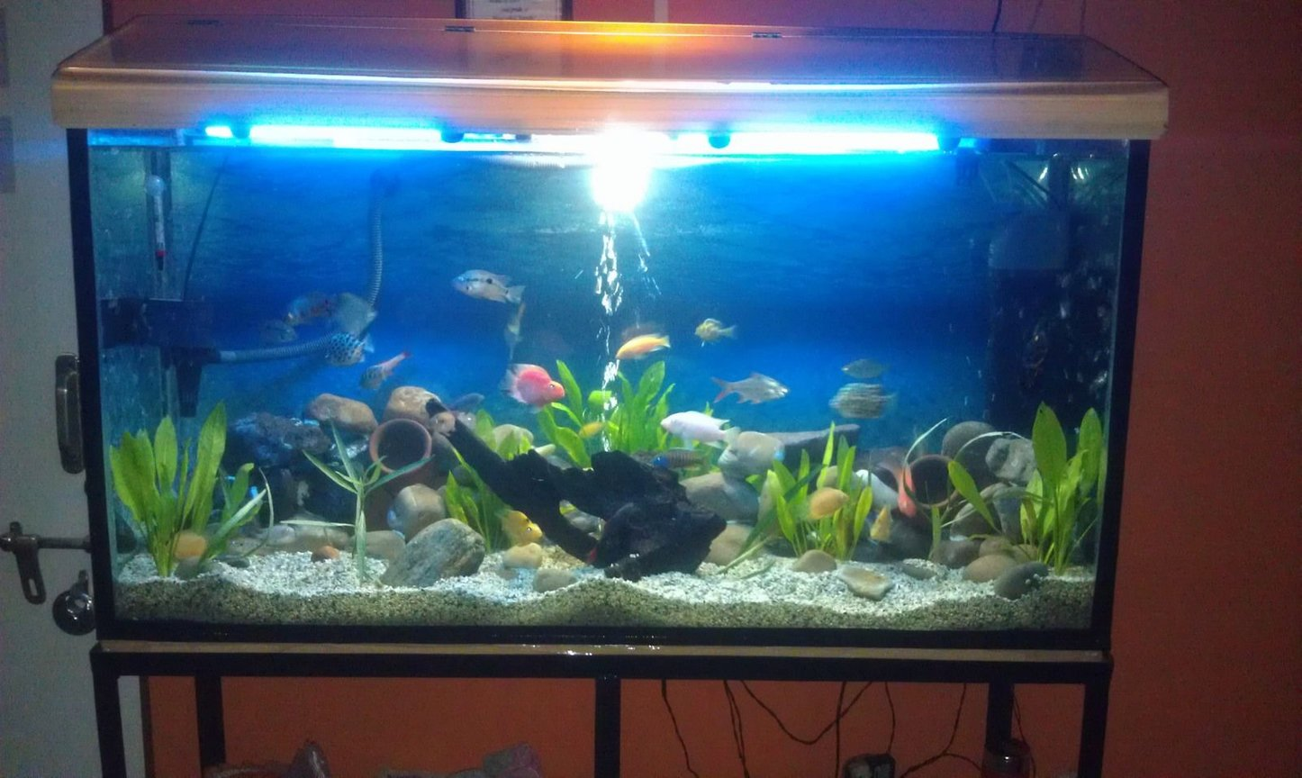 fish tank picture - Chichlids Community Tank