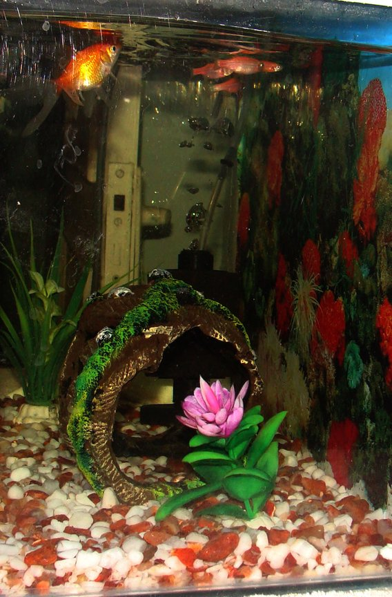 fish tank picture - fishtank side view