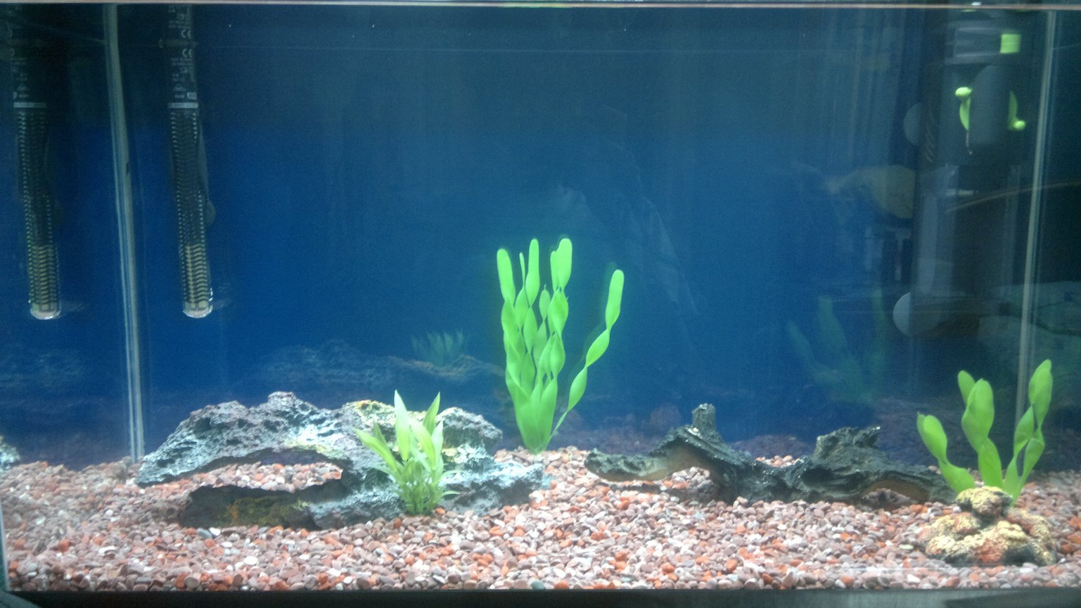 fish tank picture - My Fish tank before adding any fish during the waiting period for the useful bacteria to settle in.
