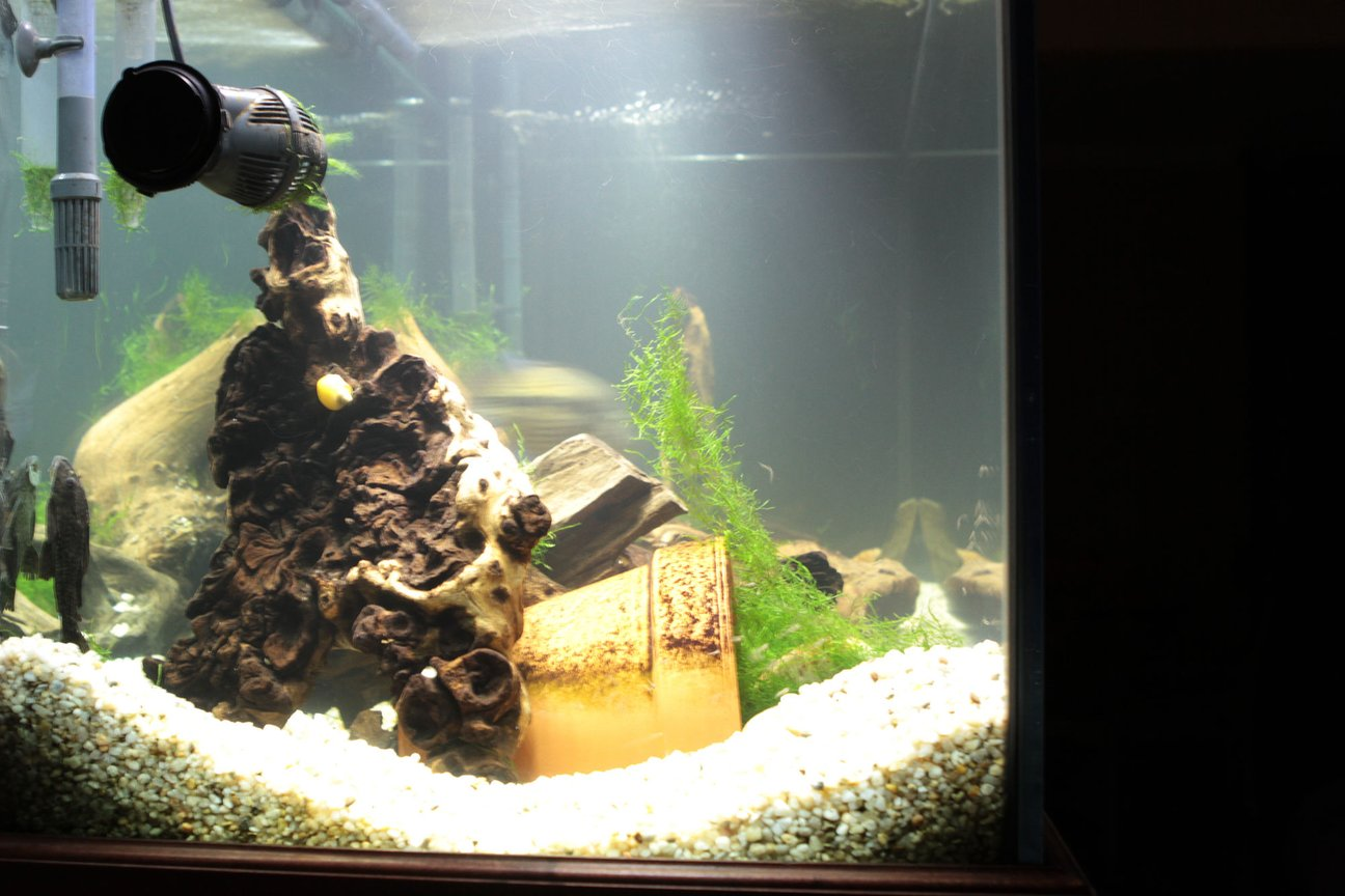 fish tank picture - side L