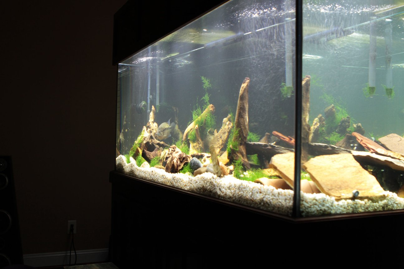 fish tank picture - C View
