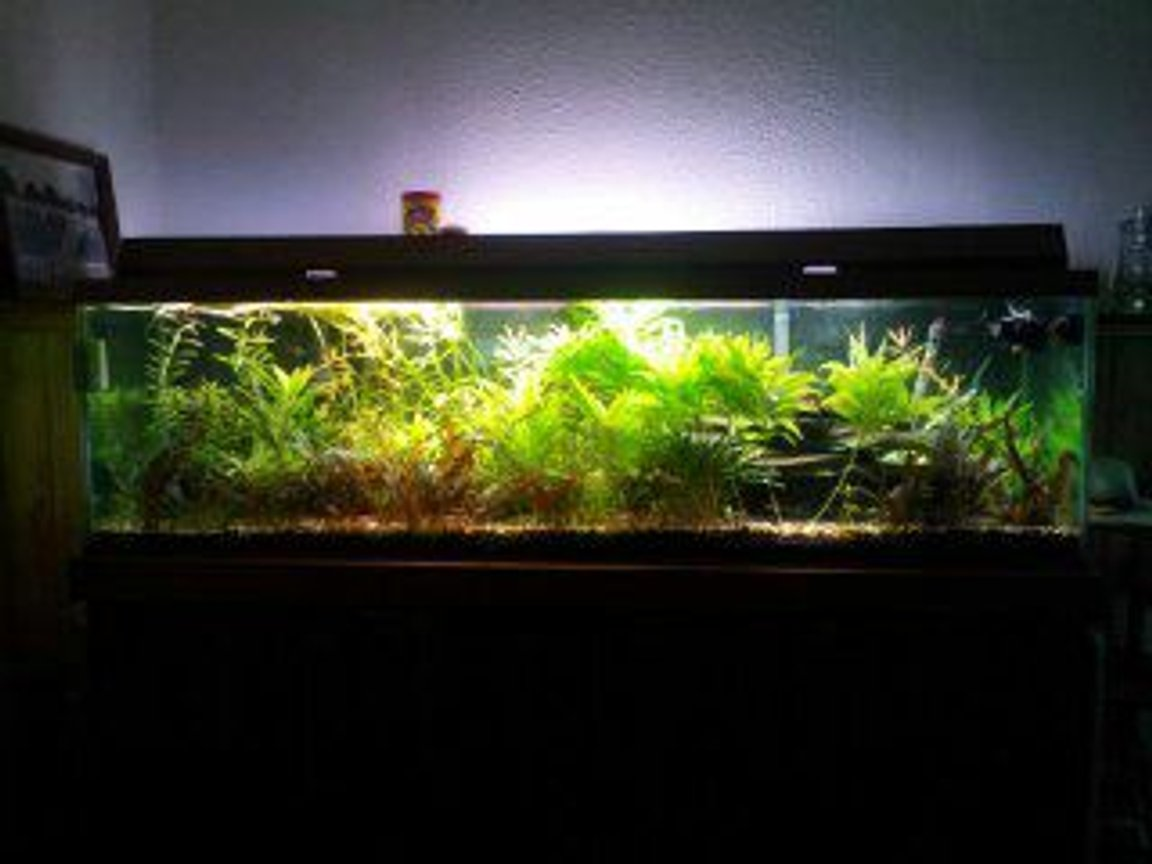 fish tank picture - ho lights on