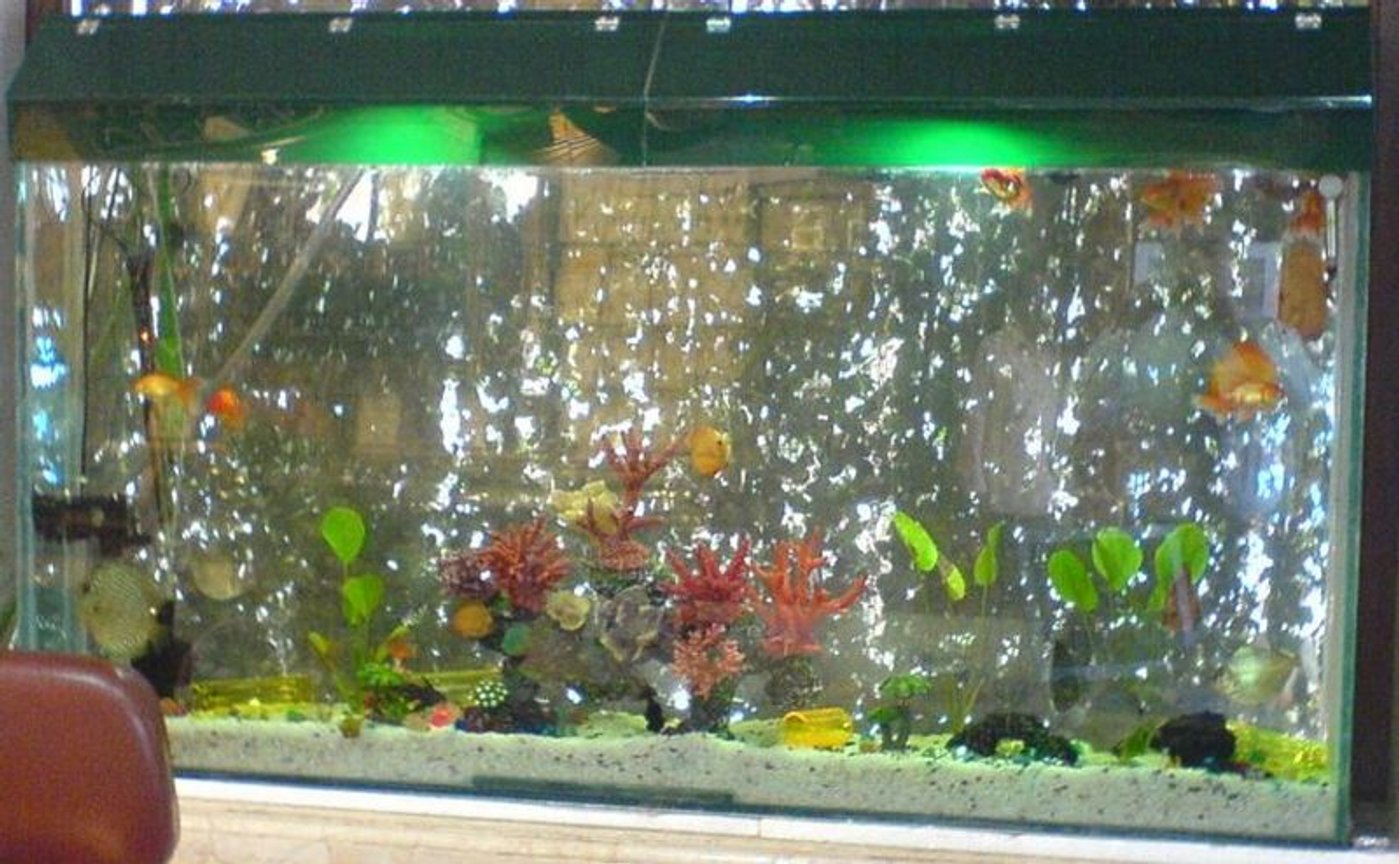 fish tank picture - 6x3x1 feet