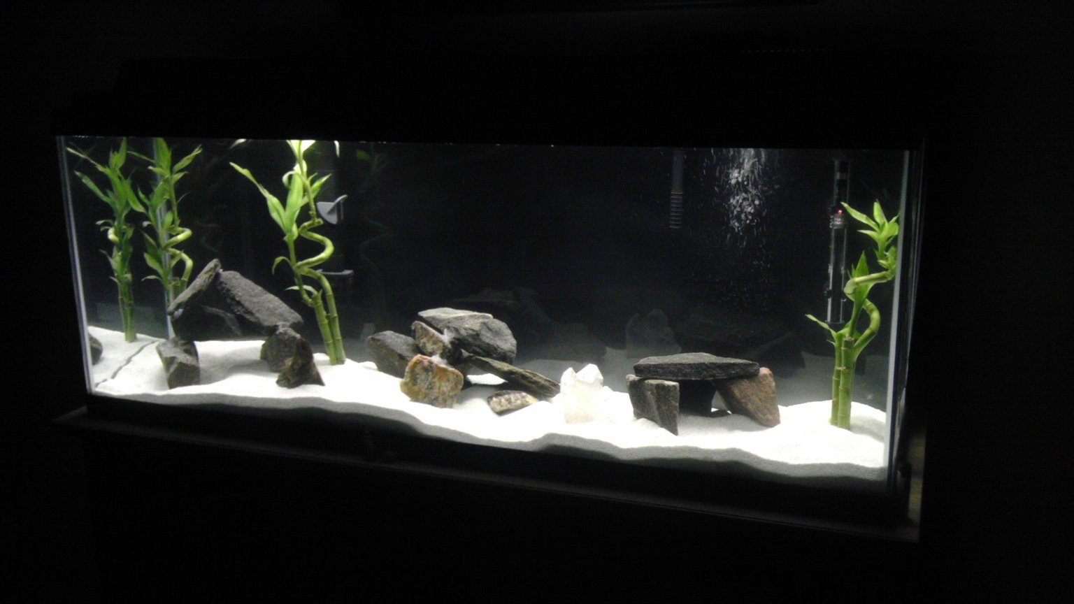 fish tank picture