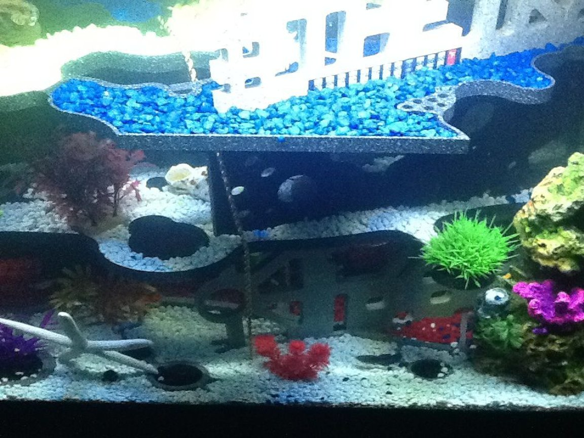 fish tank picture - Different angle