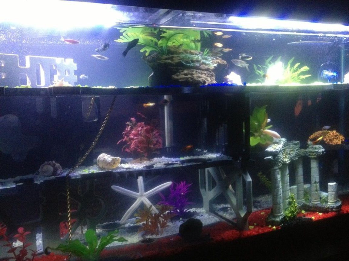 fish tank picture - Decent back view
