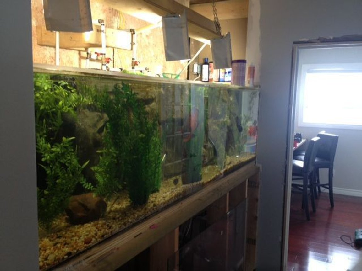 fish tank picture - i will have this all built in with cabinets. 8' long x 2' x 2'