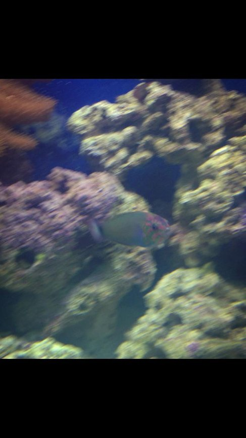fish tank picture - Wrasse