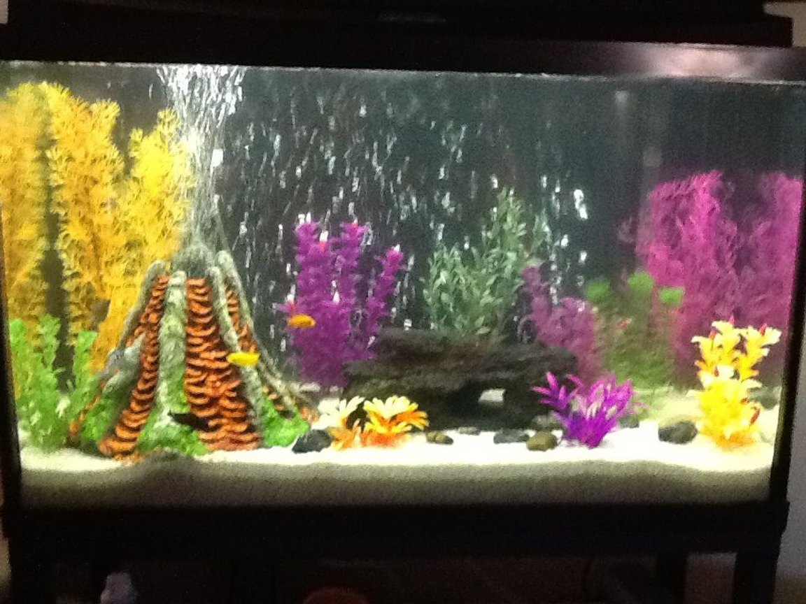 fish tank picture - Tank 2 ... 7. Mix of kinds of African cichlids and 3 oscars 1 crawfish and 2 plecostomus
