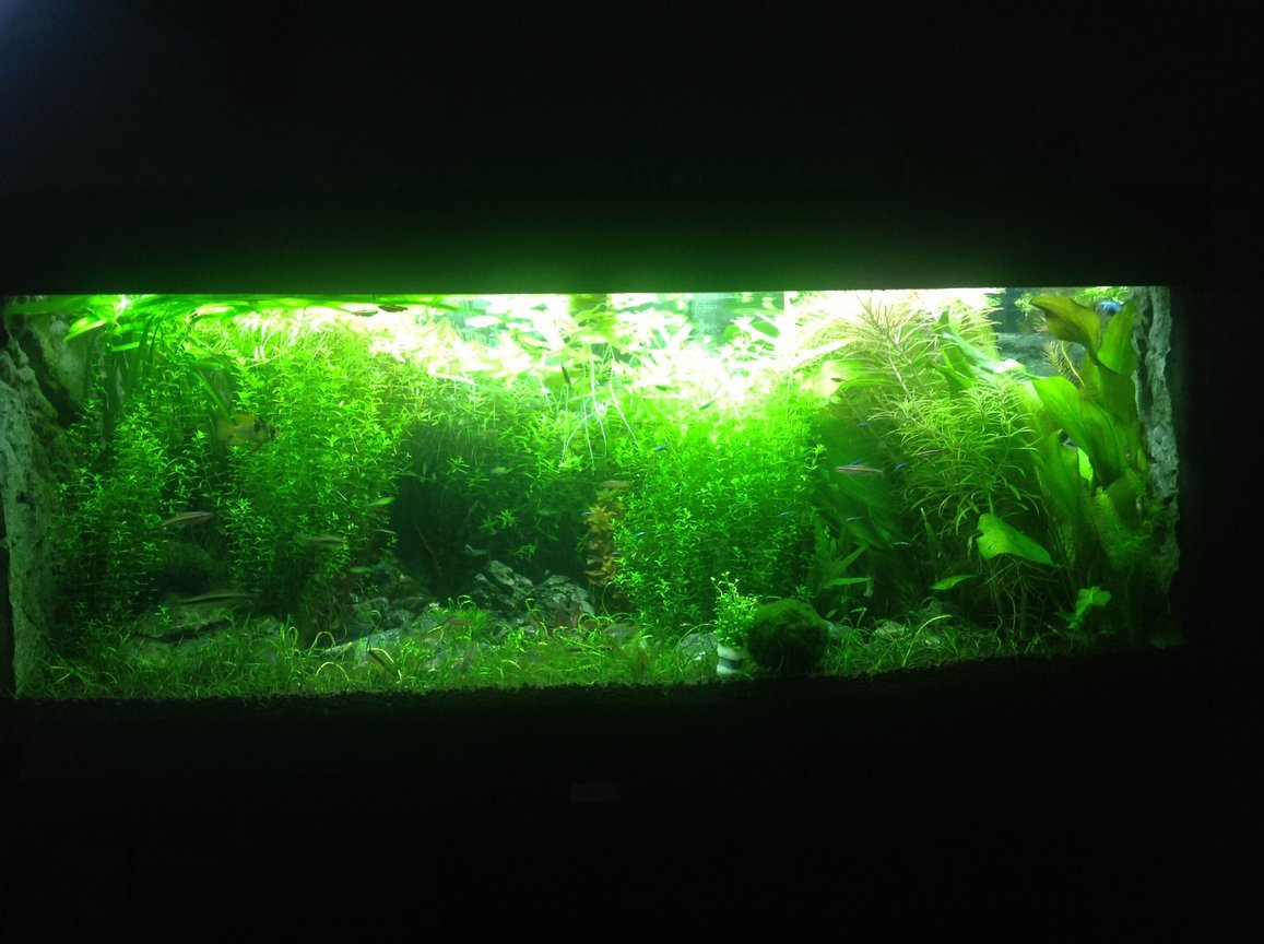 fish tank picture - Planted