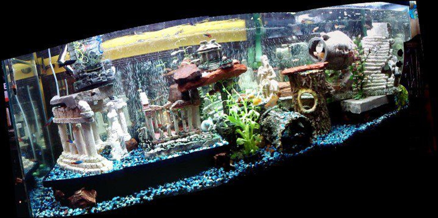 fish tank picture - This 55 gal tank is connected by a bridge to another 55 gal planted tank. This tank is not planted, and built around the idea of vertical levels, all the decor is elevated by about 2 inches from the ground, creating plenty of cave like hiding spaces.