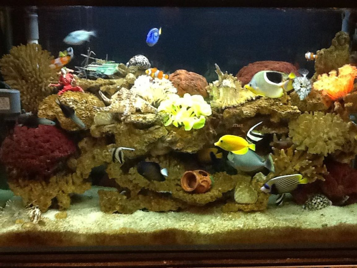 fish tank picture - My seawater fish tank