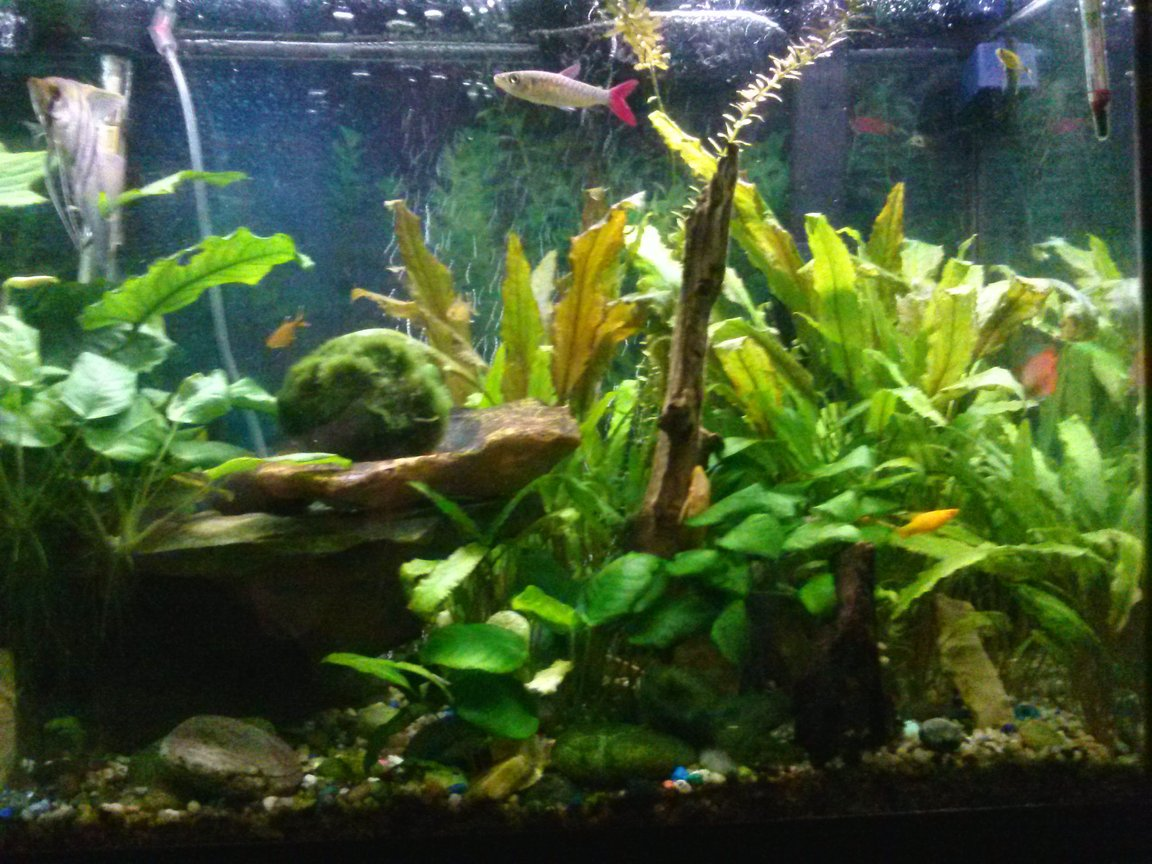 fish tank picture - Right half of tank