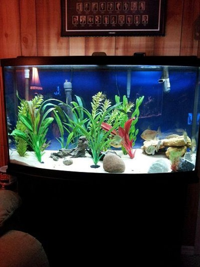 fish tank picture - 46 bowfront