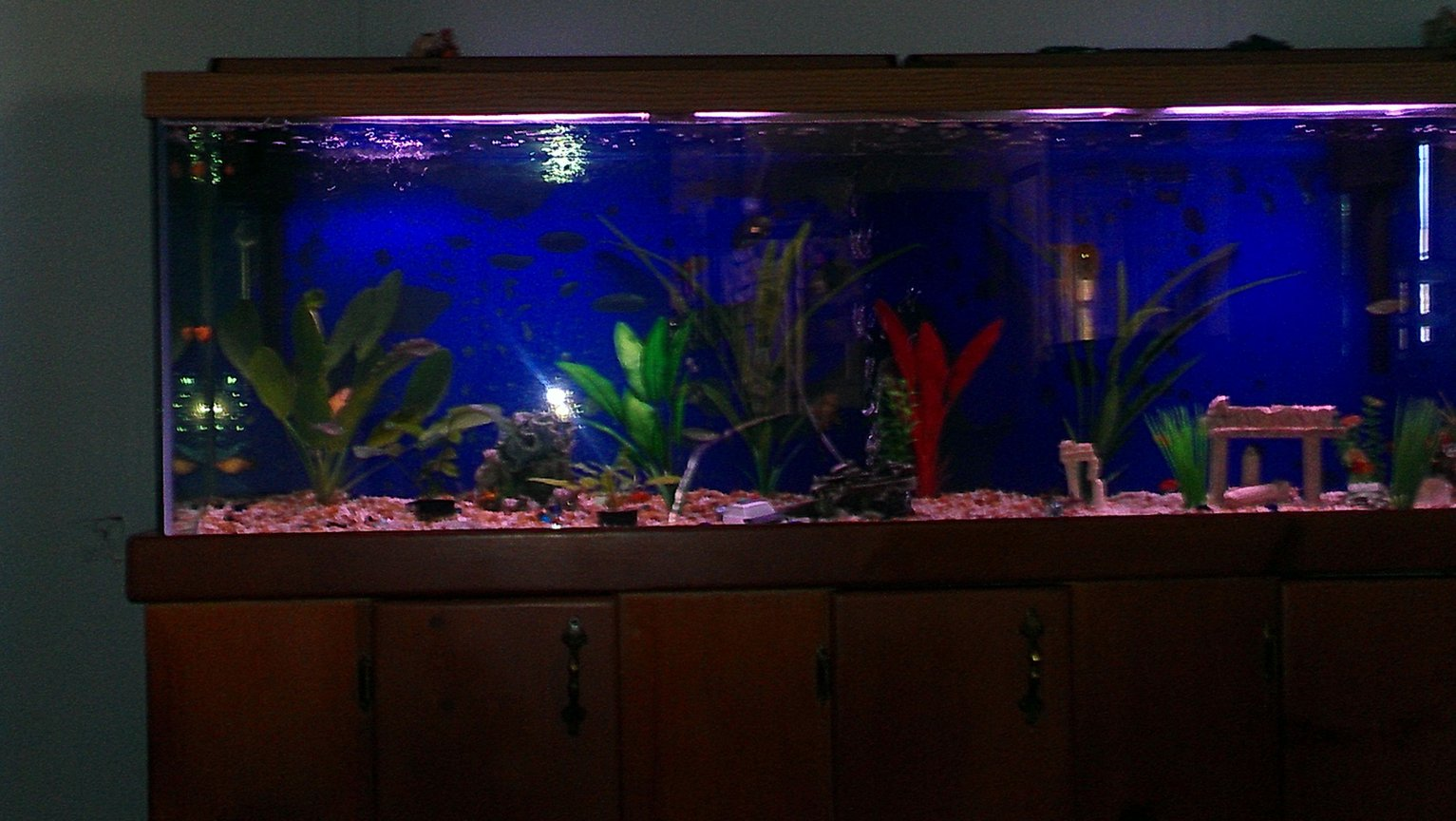 fish tank picture - Looks nice in the dark.