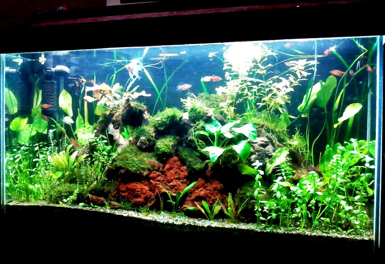 fish tank picture - Before the java fern.