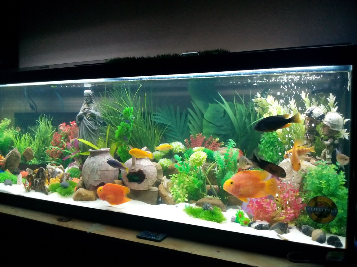 fish tank picture - ..