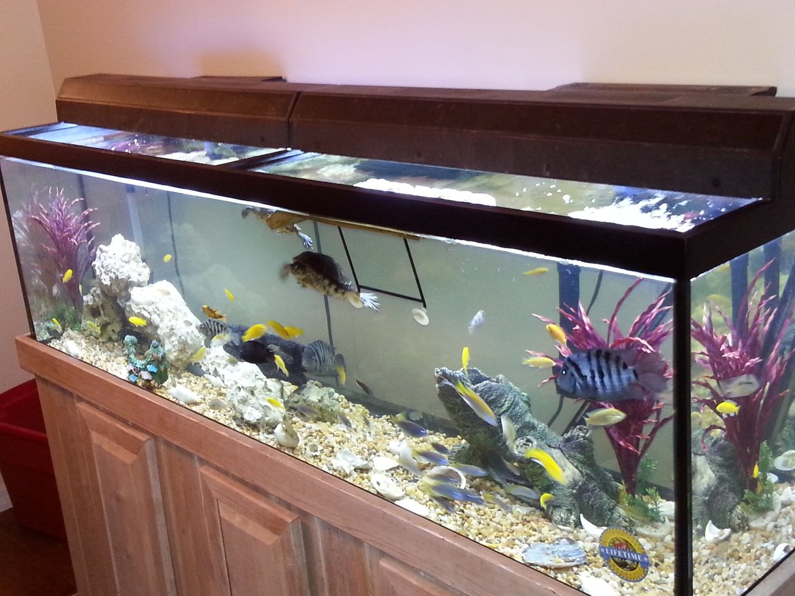 fish tank picture - What do you think
