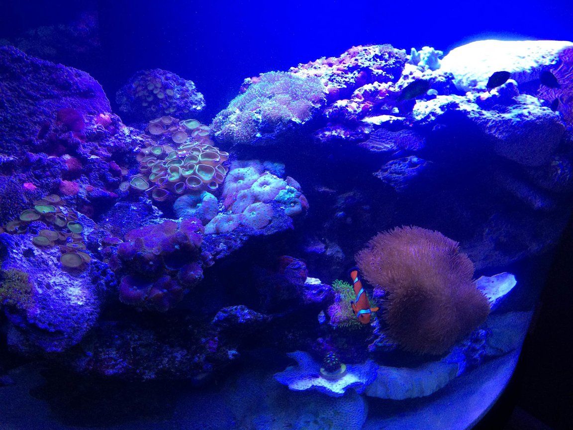 fish tank picture - Corals and Fish