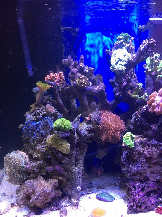 fish tank picture - Left