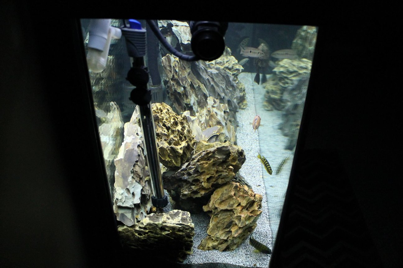 fish tank picture - Side shot of Dragon Stone stacked. Fun and easy stone to stack and work with!