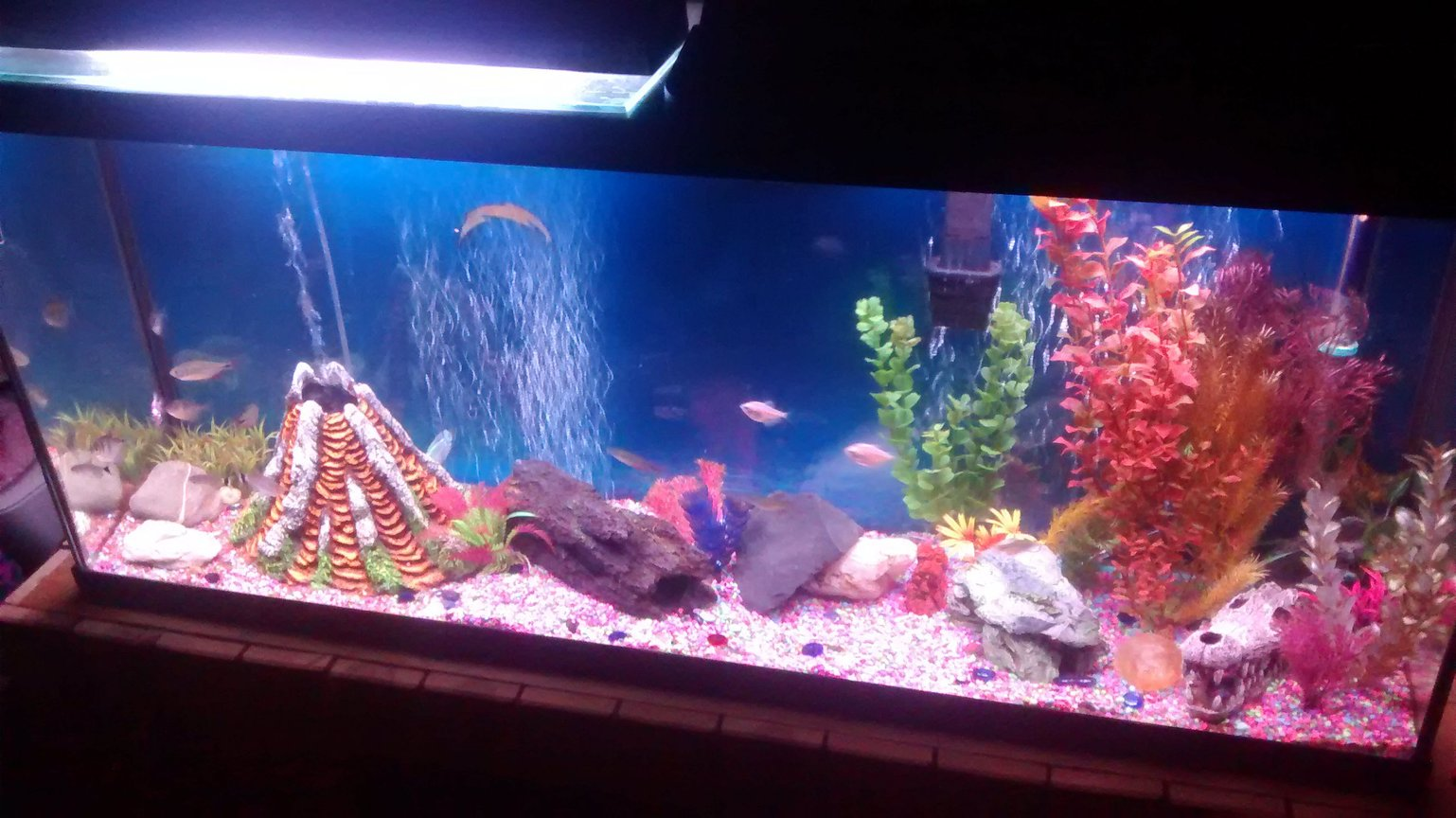 fish tank picture - Go bolts!!