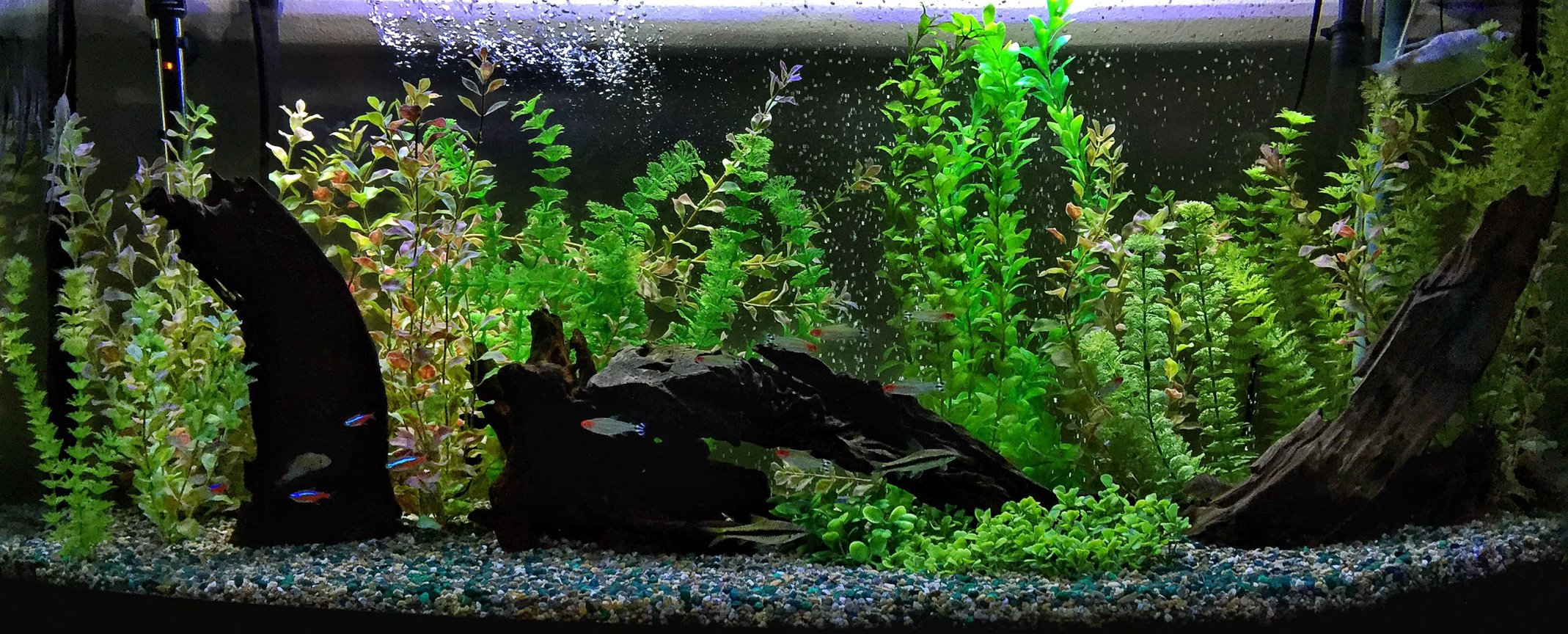 fish tank picture - 72 bow front
