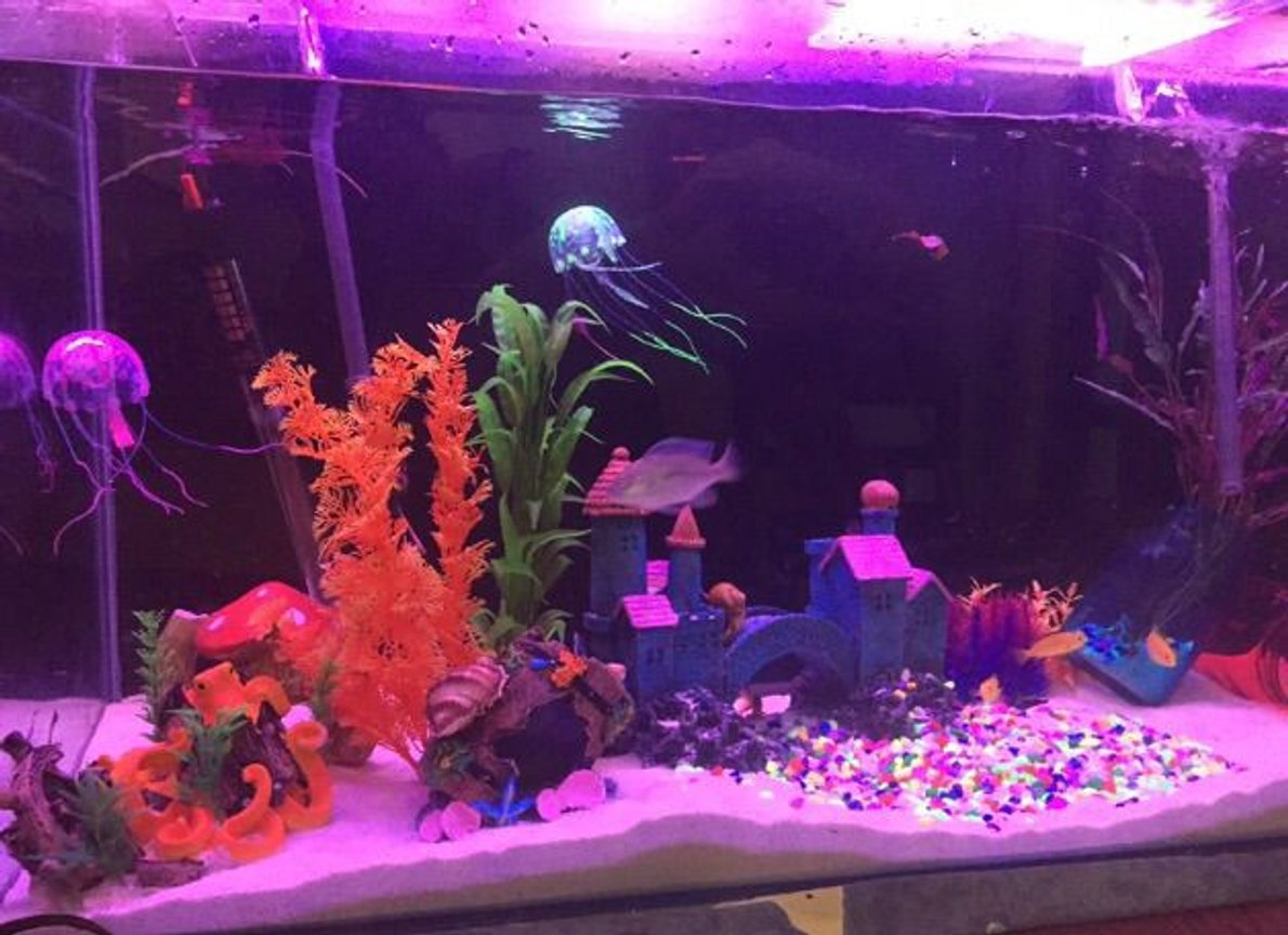 fish tank picture - Fantasia end