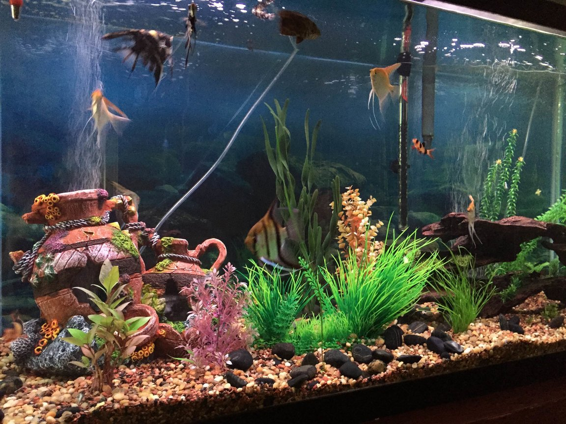 fish tank picture - Angled tank view