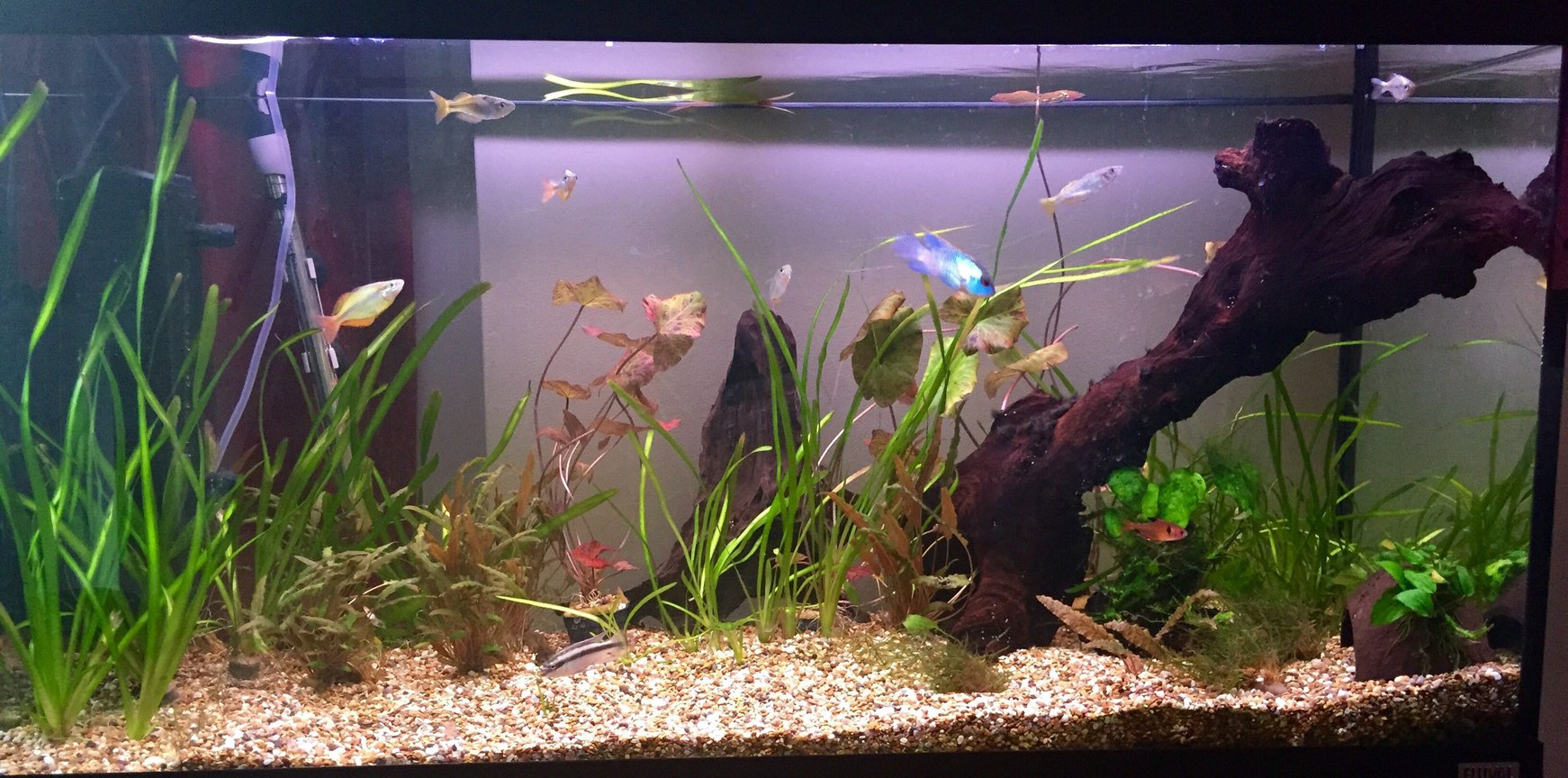fish tank picture - Tank few months on