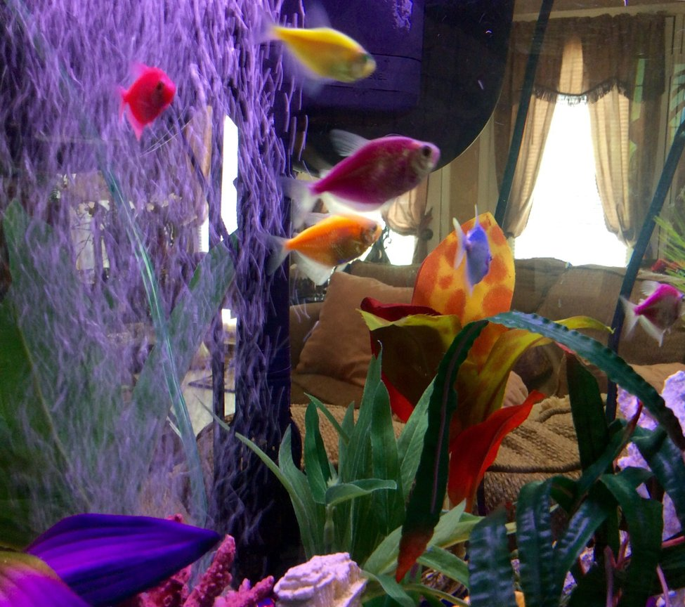 fish tank picture - My discription of my aquarium would be: My New Aquarium. With things I am interested in. The Sphix, Greek Ruins, Treasure Hunting, Scuba Diving, Different Plants, Mermaids, and Lots Of Color!
