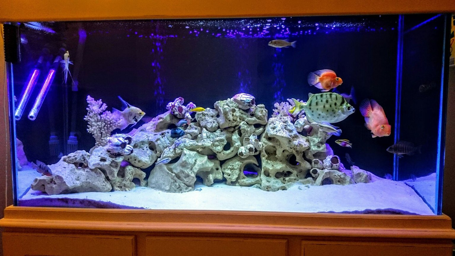 fish tank picture - Lighting effects
