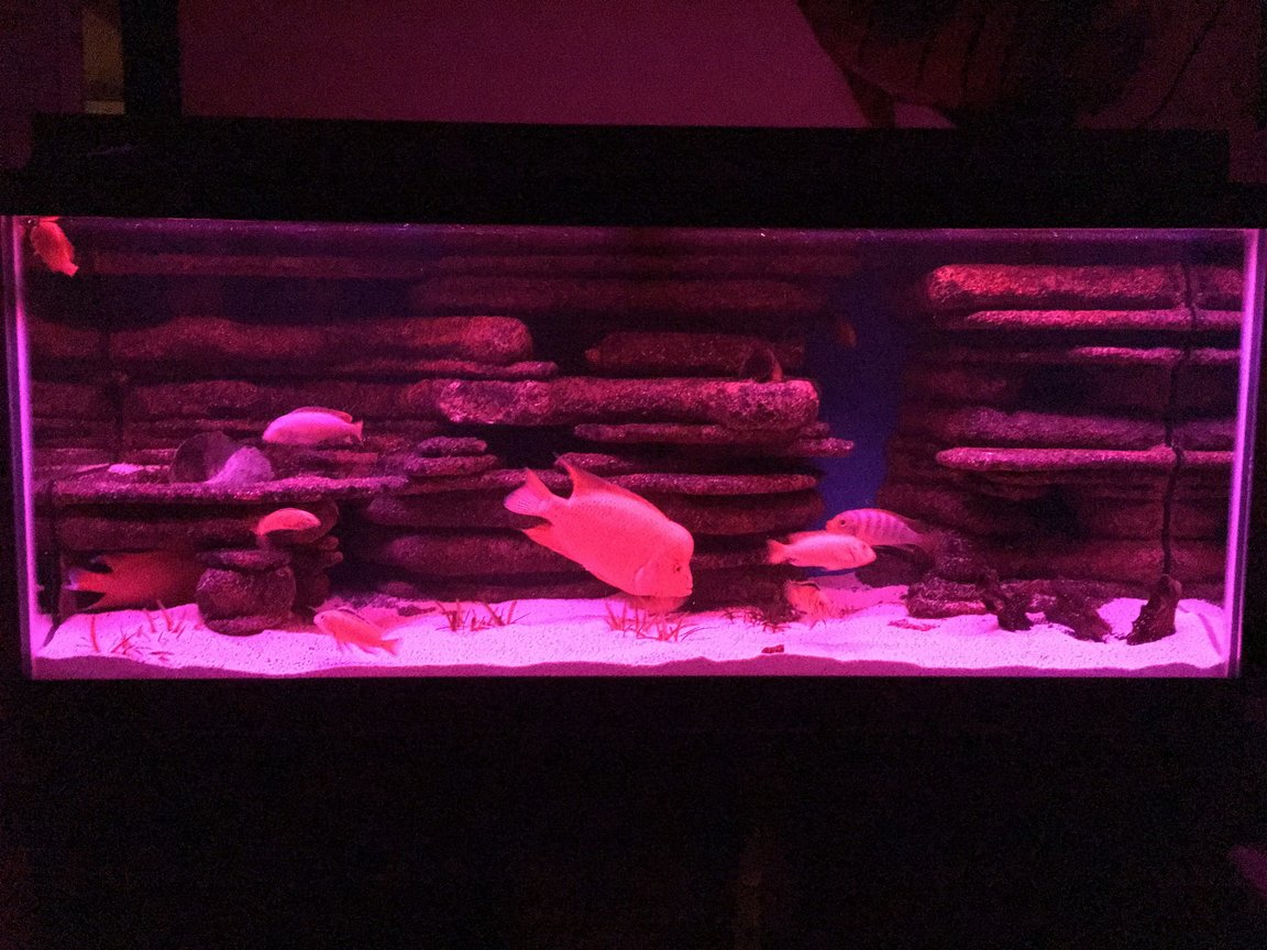 fish tank picture - Pink led