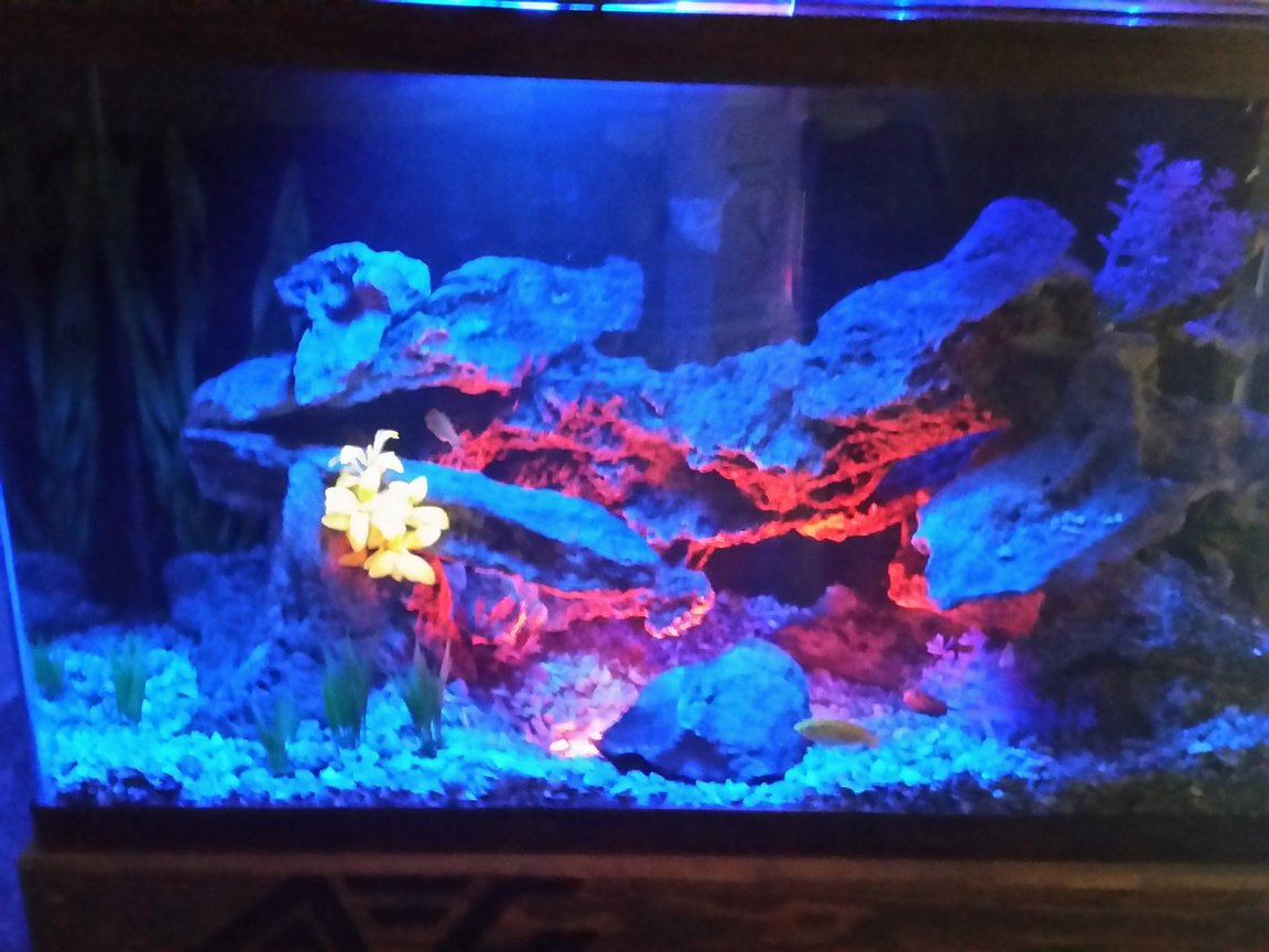 fish tank picture - Additional