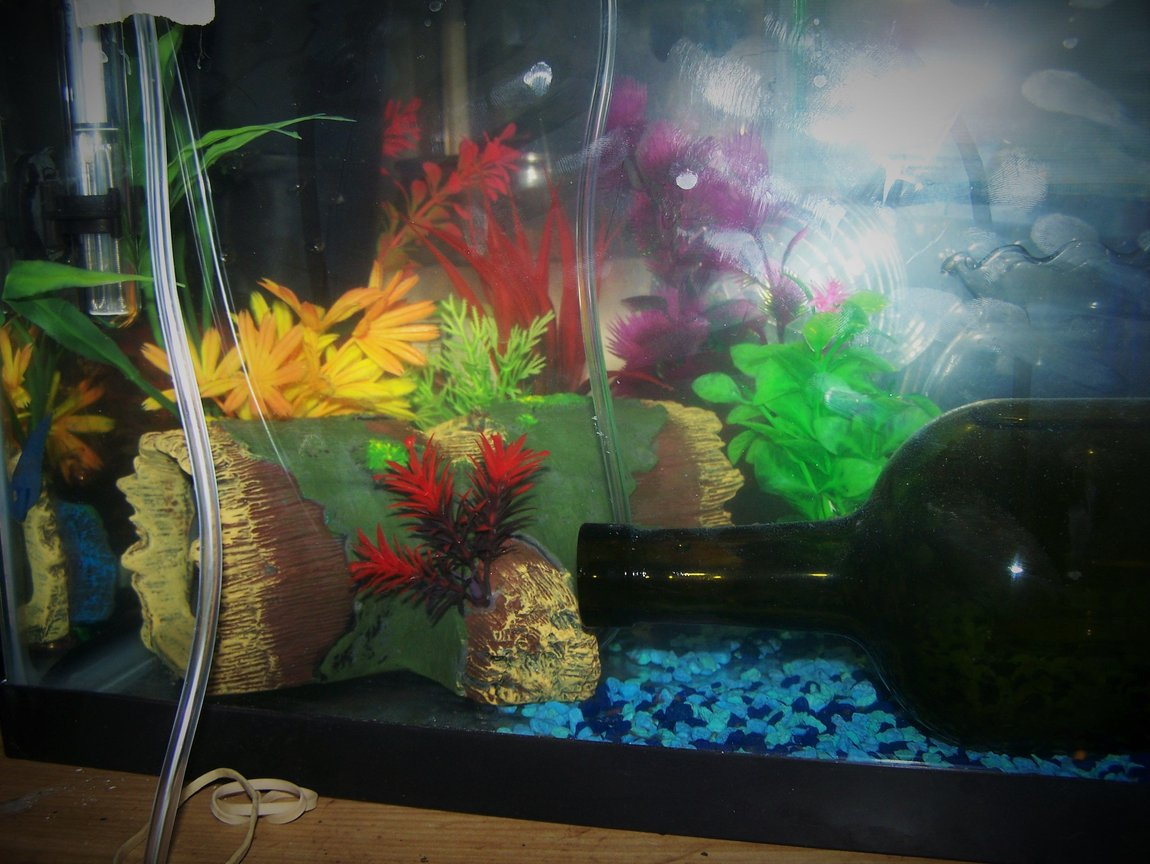 fish tank picture - new short plants, log cave, heater and filter betta breeding