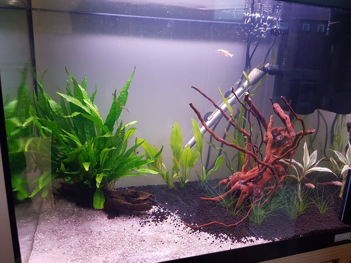 fish tank picture - Another angle