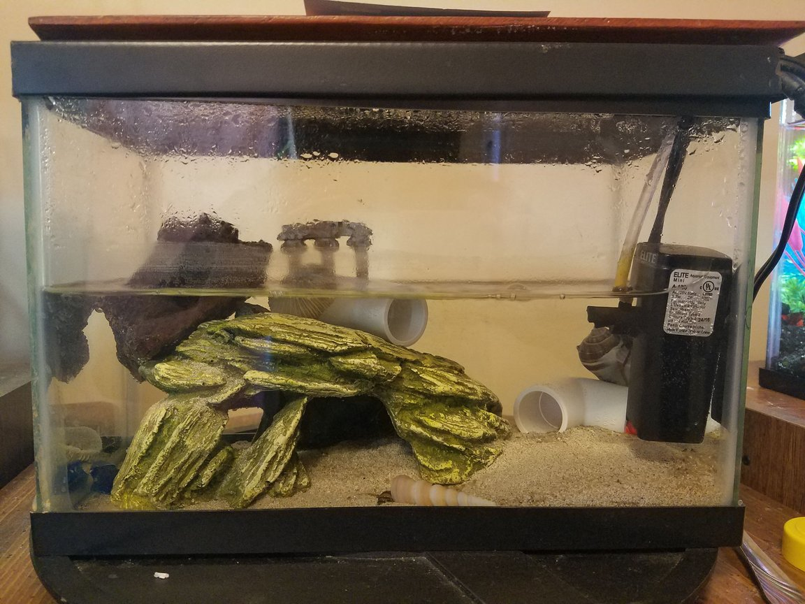 fish tank picture - Fiddler crab habitat. 2.5 gal tank small internal sponge/powerhead like filter. Land access, many smal pvc caves. Also placed on a lazy susan so you can always locate the pair of crabs. Brackish tank. Had over a year and a half now. Doing great!