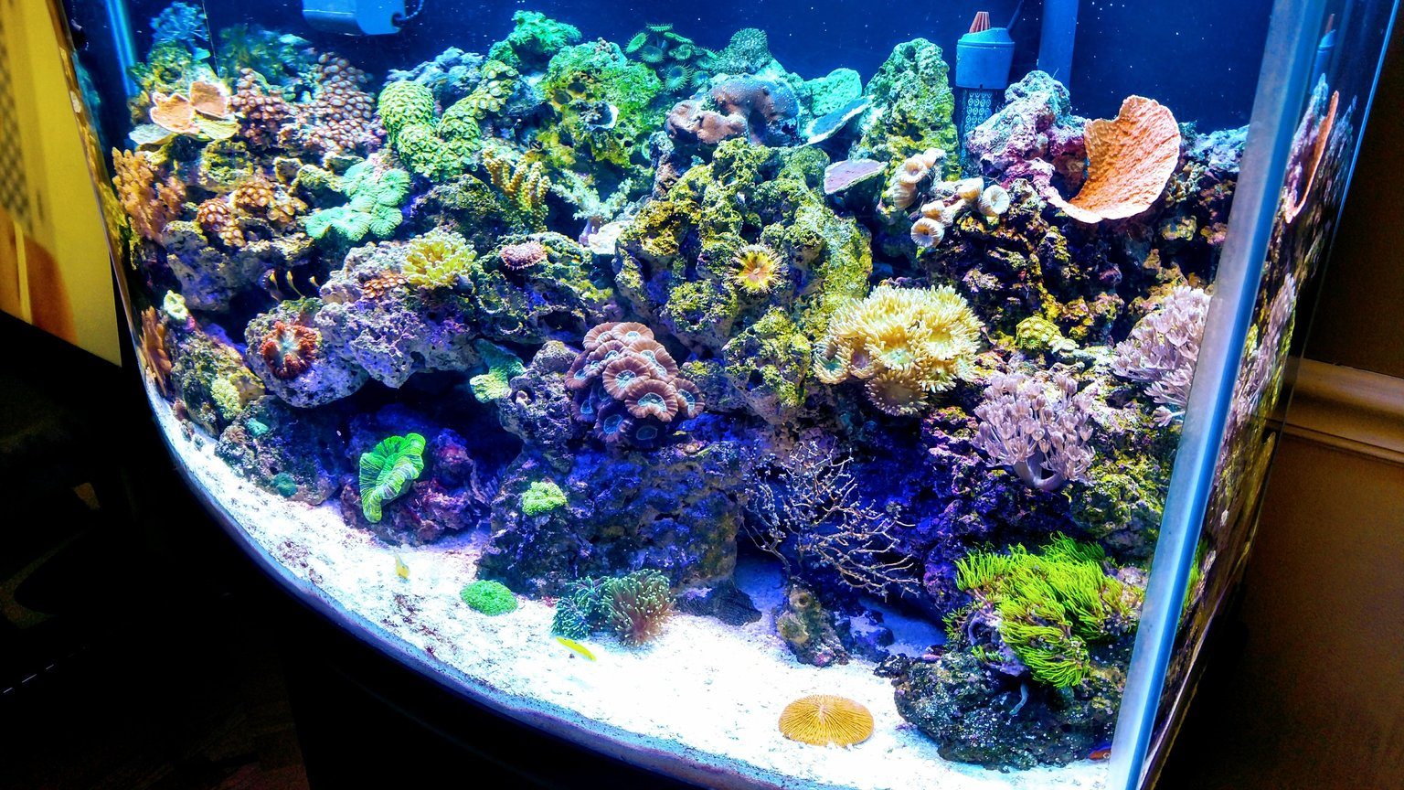 fish tank picture - 46gal bowfront