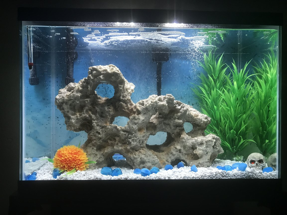 fish tank picture - New 20 gallon fish tank